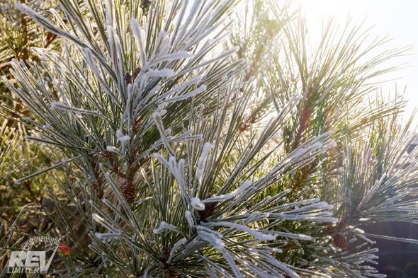 Frost Fairies