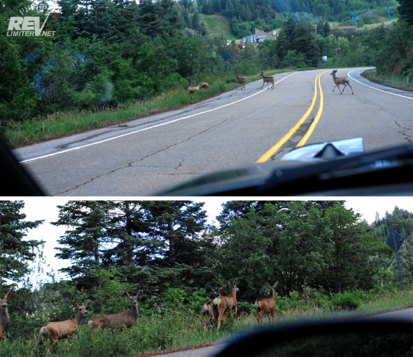 Deer! A whole bunch of them!